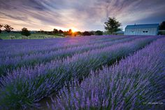 Purple Dusk by Chris Gin, via Flickr  There are some amazing pictures on this website.  Definitely worth checking out.