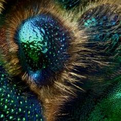 Explore the beauty of the Orchid Cuckoo Bee in astonishing detail. Created from around 8000 photographs taken by Levon Biss as part of the Microsculpture project.