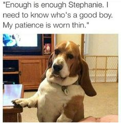 29 Dog Pictures That Are Never Not Funny