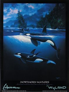 Northern Waters - Orca Killer Whales - by Wyland