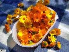 Ogrodnicza Obsesja: Suszenie kwiatów nagietka lekarskiego. Barbecue, Cantaloupe, Fruit, Vegetables, Food, Barrel Smoker, Essen, Bbq, Vegetable Recipes