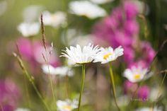 veredit-photographic-poems: Der Sommerfaden