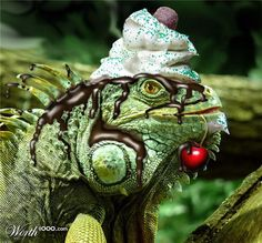 Iguana Delight By Todd1000