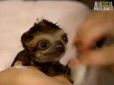 Sloths so cute!