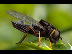 Nano Drone Technology Robotic Micro Spying  Unbelievable Drone