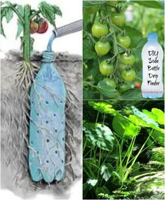 Best representation descriptions: Watering Plants Soda Bottles Garden Ideas Related searches: Gardening Tips for Beginners,Gardening Tips a. Container Gardening, Gardening Tips, Kitchen Gardening, Gardening Services, Hydroponic Gardening, Small Patio Ideas On A Budget, Bottle Garden, Vegetable Garden Design, Vegetable Gardening