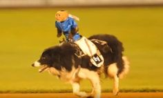 """The Wilmington Blue Rocks, a minor league baseball team, are hosting cruel """"monkey rodeo"""" events this summer. Please urge them to cancel these events!"""