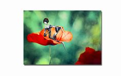 The poppies- 16,5x11 inches  fine art print - Signed - Printed by a professional