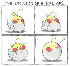 """Also known as""""Phases of a Sleeping Birb"""""""