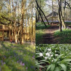 #spring down at #hgc #treehouse. @huntergathercook #bluebells #wildgarlic