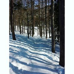 【kanata_color】さんのInstagramの写真をピンしています。《今日の現場 ◇ 今日も~いいお天気で👌  @北志賀高原 よませ温泉スキー場 ◇ #信州 #長野 #北志賀 #夜間瀬 #スキー場 #空 #イマソラ #雪 #雪山 #雪景色 #林 #並木道 #白樺 #季節労働 #今日の現場 #snow #sky #ski #snowboard #instapic #instadaily #nagano #japan》