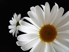~~Front seat - back seat ~ daisies~~