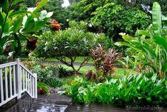 40 fresh tropical garden ideas with houseplants - - 40 fresh tropical . - 40 fresh tropical garden ideas with houseplants – – 40 fresh tropical garden ideas with housepl - Tropical Garden Design, Tropical Landscaping, Tropical Plants, Garden Landscaping, Tropical Gardens, Landscaping Software, Landscaping Ideas, Paradis Tropical, Casa Hotel