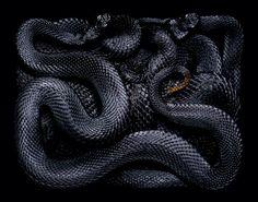 serpents GIUDO MOCAFICO