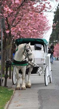 Historic Charleston, South Carolina Horse Carriage Tour can be booked through #absocharleston #visitcharleston
