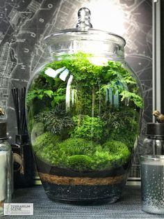 Terrarium - You are in the right place about Miniature Garden gate Here we offer you the most beautiful pictur Moss Garden, Succulents Garden, Water Garden, Garden Plants, Indoor Plants, Garden Gate, Indoor Gardening, Garden Tools, Mini Terrarium