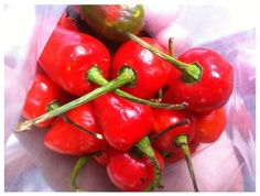 these fire red Naga chillies add to the adventure whilst you travel through India. www.unventured.com
