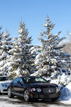 Bentley's after the first big snowfall at Twin Cities Luxury Auto