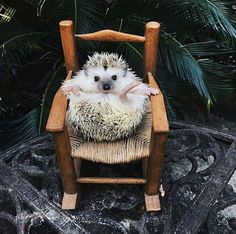 Make one special photo charms for your pets, 100% compatible with your Pandora bracelets. Cute Hedgehog