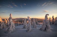 Photo snow guardian... by Dawid Kowalczyk on 500px