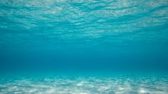 Underwater ( Wallpaper and Background Image are posted in the amazing resolution (With File Size of: 2264 KB). Underwater Wallpaper, Underwater Background, Underwater Pictures, Ocean Pictures, Tumblr Backgrounds, Wallpaper Backgrounds, Moving Wallpapers, Wallpapers Android, Hd Desktop