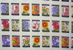 Flower Seed Packets ~ Colorful packets lined up in rows Packets measures approximately 2 wide by 3 1/2 Tall On a cream background  Everyday