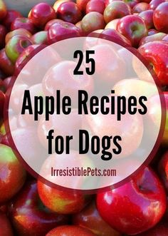 25 Apple Recipes for Dogs by IrresistiblePets.com