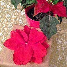 Der Hingucker für eure Weihnachtsgeschenke: Weihnachtssterne! Schau dir an, wie du die schönen Weihnachtsblumen aus Servietten basteln kannst.