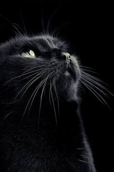 Un chat noir. Un gato Negro. A Black cat. Beautiful Cats, Animals Beautiful, Cute Animals, Lovely Eyes, Happy Animals, Hello Beautiful, Nature Animals, Beautiful Beach, Crazy Cat Lady