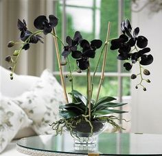 terrarium by studio garden black orchid. terrarium by studio garden The post black orchid. terrarium by studio garden appeared first on Ideas Flowers. Dark Flowers, Types Of Flowers, Exotic Flowers, Amazing Flowers, Beautiful Flowers, Moth Orchid, Orchid Plants, Exotic Plants, Orchids