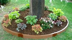 Flower Bed Ideas in front of House Designs For Garden Flower Beds Flower bed ideas in front of a house. Various designs for garden flower beds can be applied on your garden. Landscape Borders, Landscape Designs, Landscaping Around Trees, Front Yard Landscaping, Luxury Landscaping, Landscaping Jobs, Landscaping Company, Landscaping Design, Lawn Edging