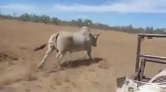 Look It Hunting Best Way of Hunting Must Watch