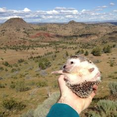 Every day Biddy is reminded that the earth is a really beautiful place. | The Fantastic Adventures Of Biddy The Hedgehog