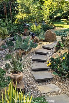 Eve Thyrum succulent garden. Stepping stone pathway.