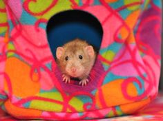 Chinchilla UPIN Small Animal Double-Deck Canvas Hammock Hamster Squirrel Dangling Sleeping Bag for Mouse M, Owl Rat Gerbil and Dwarf Hamster