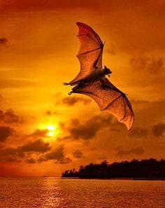 A Flying Bat
