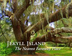 The Live Oaks of the Golden Isles of Georgia. Some are believed to be over 600 years old! Oh The Places You'll Go, Places To Travel, Beautiful World, Beautiful Places, Down In New Orleans, Pickens County, Live Oak Trees, Jekyll Island, Sea To Shining Sea