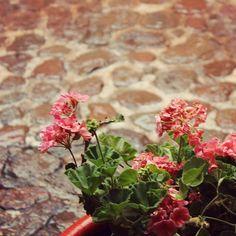 🌺🌺🍁 #picoftheday #photography #photooftheday #mondaymood #love #photogram #photo #flowers #instaflower #stones #warmcolor #tuesdaypost #tuesdaymood