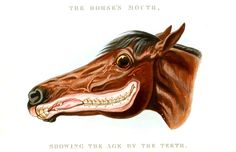 """Horse Teeth  Mayhew, Edward, D 1800. """"The horse's mouth : showing the age by the teeth / Containing a full description of the periods when the teeth are cut; the appearances they present; the tricks to which they are exposed; the eccentricities to which they are liable; and the diseases ..."""" Scan of 2 d image in the public domain believed to be free to use without restriction in the US."""
