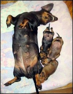 """Now pups, this is how we get our bellies rubbed"""
