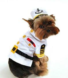 bad Ass Petz-White Captain Halloween Dog Costume « Pet Advertisings