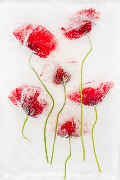 Summer Introduction - Ice and Flowers project © Cristina Velina