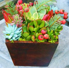 This is a beautiful winter themed arrangement of live Christmas colored succulents and it would be a festive addition to your Christmas and Holiday