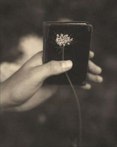Victor Schrager (American, b. Queen Anne's Lace, 1999 Platinum/palladium print, 10 x 8 inches x cm) Ethereal Photography, Fine Art Photography, Queen Annes Lace, My Dear Friend, Faux Flowers, Black And White Photography, Monochrome, Hands, Midnight Garden