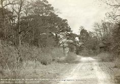 Picture the Past Beanford Lane Description: Woods Near Oxton, 1911 Image Date: shows the water splash ( ford ) on beanford lane . The scene is the same a 100 years later. (Information kindly supplied by Andrew Smith). Andrew Smith, Image Archive, Canvas Prints, Art Prints, Derbyshire, Historical Photos, Woods, The Past, Scene