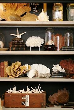 Home Decorating: how a themed display SHOULD be done. Seashell shelf display.