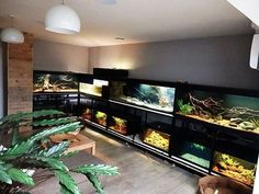 A Fishroom Filled With Biotopes Photos and article by Jeroen Vanhooren I am Jeroen from Belgium. Reptile Habitat, Reptile Room, Reptile Cage, Reptile Enclosure, Reptile Tanks, Paludarium, Vivarium, Animal Room, Animal House