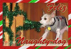 christmas card ideas for your dog romp italian greyhound rescueromp italian greyhound rescue chicago