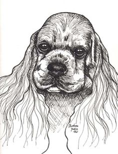 Print of Ink Drawing Cocker Spaniel Signed by Barbara Butler | eBay