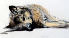 Walty Dudok van Heel - wolvenpup - wolf pup Wolf, Animal Portraits, Dutch Artists, Animal Paintings, Drawing Ideas, Pastels, Illustration, Designers, Watercolor